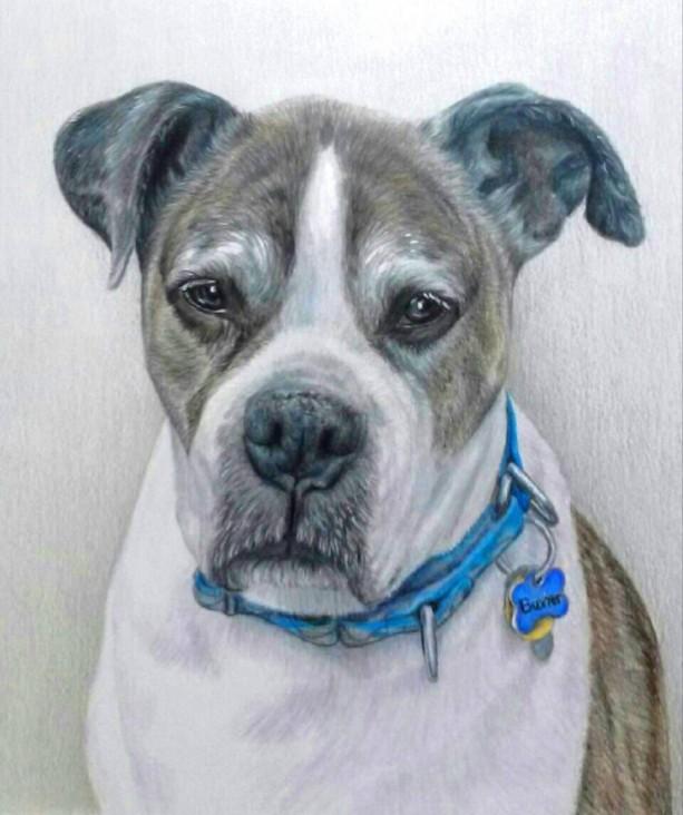 9249f2d66d2b Hand-Drawn, Custom Pet Portrait, 11 x 14 Colored Pencil Art, cat ...