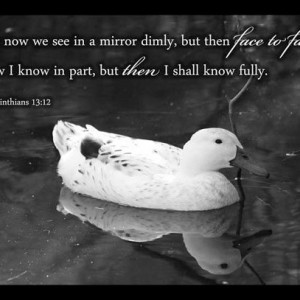 1 Corinthians 13 verse 12 - Scripture Art - Black & White duck photo - First Corinthians 13 - Bible art, Christian wall decor, Christian art