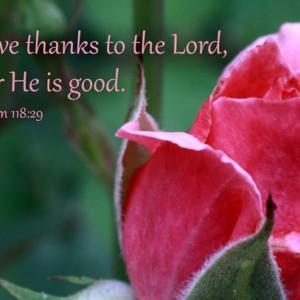 Christian Art - Psalm 118 verse 29 - Pink Rose Photo - Christian photo, religious artwork, Bible verse art, Scripture wall art, Bible art