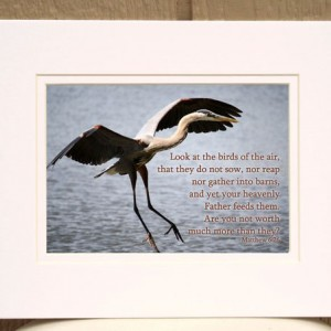 Scripture Art - Matthew 6 verse 26 - Great Blue Heron Photo - Religious wall decor, Christian photo, Christian home decor, Christian gift