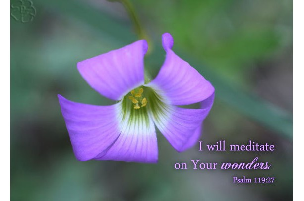 Scripture Art - Psalm 119 verse 27 - Purple Wildflower Photo - Religious art, Christian gift, Bible art, religious decor, Christian art,