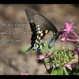 Swallowtail Butterfly Picture I Can Do All Things Through Christ Who Strengthens Me Philippians 4:13 Christian Bible verse art wall decor