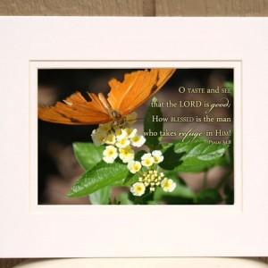 O Taste and See That the Lord Is Good- Orange Butterfly Photo with Psalm 34 verse 8. Christian wall art, religious decor, Scripture artwork