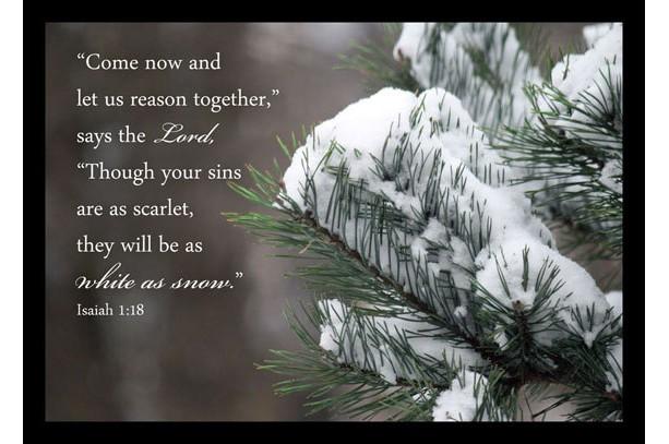 Snow On Pine Photo