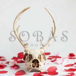 "Deer Skull 5""x7"" Valentine Card Set of 2"
