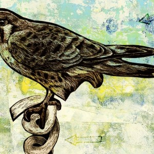 Seen The Wind - Kestrel Falcon Bird art Print.