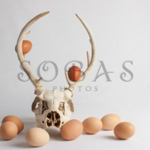 "Deer Skull 5""x7"" Easter Card Set of 2"