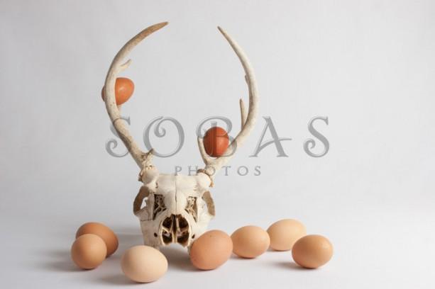 "Deer Skull 5""x7"" Easter Card Set of 2"
