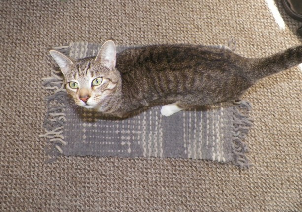 Hand-Woven Cat Blanket / Furniture Cover