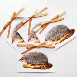 Hedgehog Cards | Blank Card Set | Hedgehog Stationery | Greeting Card Set | Hedgehog Note Cards | Cards with Animals | Animal Cards