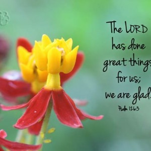 Inspirational Art - Yellow & Red Flower Photo with Psalm 126 verse 3 The Lord has done great things Christian Home Decor, Scripture Wall Art