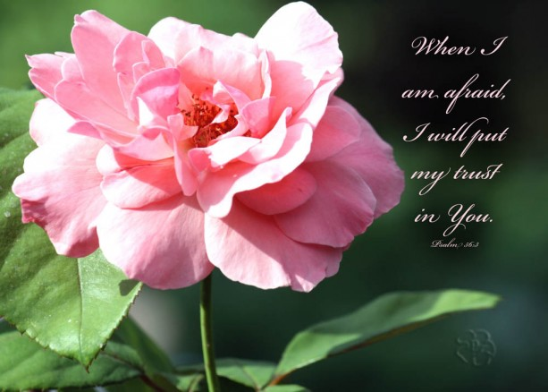 "Bible Verse Art - Pink Rose Photo with Psalm 56 verse 3 ""When I am afraid, I will trust in You"" Christian Home Decor, Scripture Wall Art"