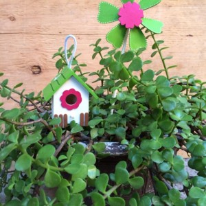 Bird house (with free succulent cuttings)
