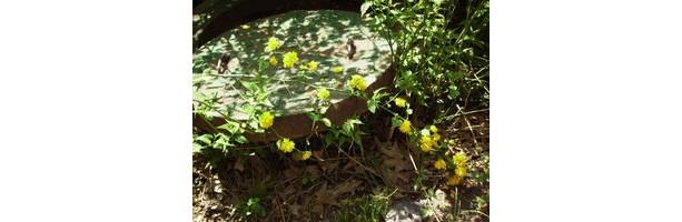 Overshadowing Plants- small