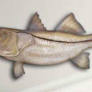 "18"" Snook Salt Water Game Fish Replica, Wall Mount, Decor, Nautical Art, Gift"