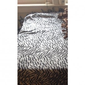 Plains Zebra Blanket